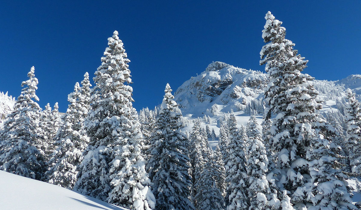 winter_offer03