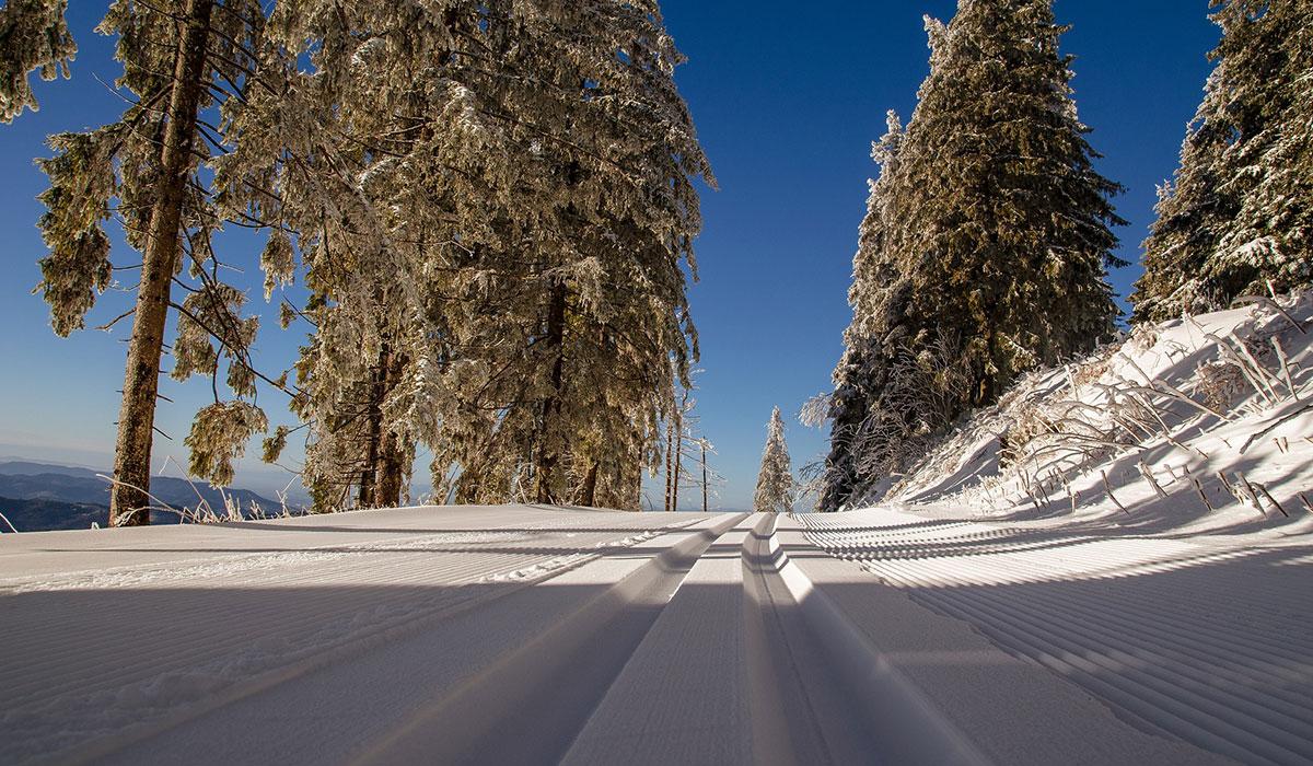 winter_offer04